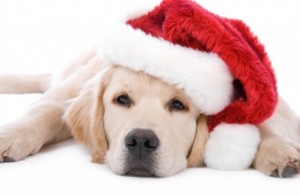 christmas-puppy-300x195